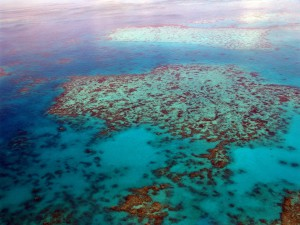 great-barrier-reef-tauchen