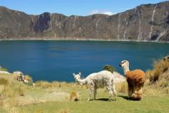 Südamerika Kreuzfahrten