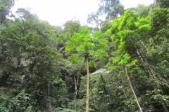 Südamerika Flusskreuzfahrt