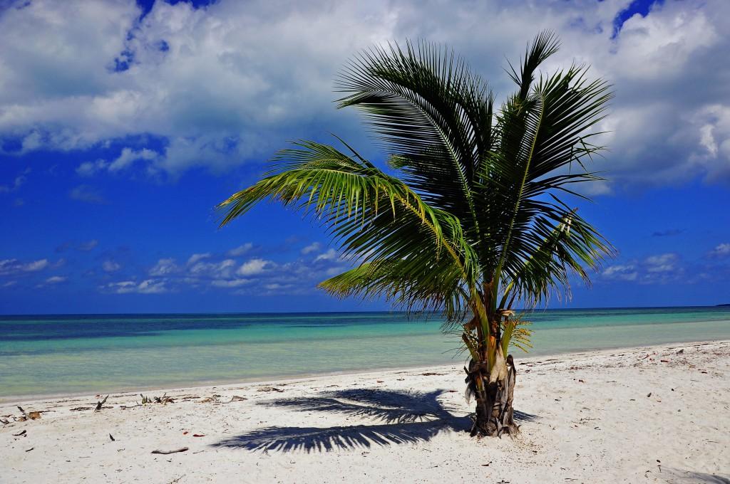 Die Strände Cubas gehören zu den schönsten der Karibik